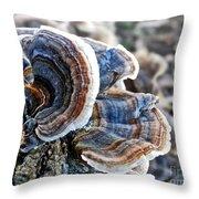 Bracket Fungi - Fungus Throw Pillow