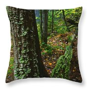 Bracket Fungi  On Pine At Granite Ridge Throw Pillow