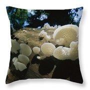 Bracket Fungus Favolus Brasiliensis Throw Pillow