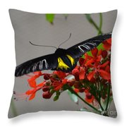 Brazilian Moth Throw Pillow