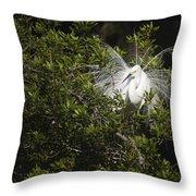 Breeding Season Throw Pillow