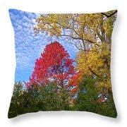 Bright Autumn Color Throw Pillow