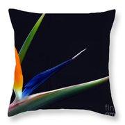 Bright Bird Of Paradise Rectangle Frame Throw Pillow