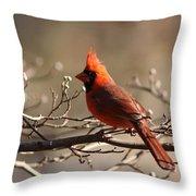 Bright Bold - Cardinal Throw Pillow
