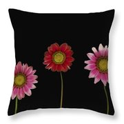 Bright Colorful Daisies Throw Pillow by Deddeda