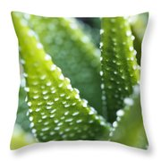 Bright Green Succulent Throw Pillow