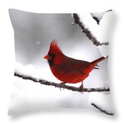 Bright In The Snow - Cardinal Throw Pillow