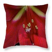 Bright Rose Amaryllis Throw Pillow