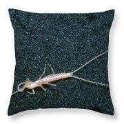 Bristle-tail, A Rare Cave Invertebrate Throw Pillow