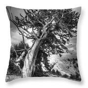 Bristlecone Patriarch  Throw Pillow