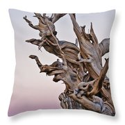 Bristlecone Pine - Early Morning - 1 Throw Pillow