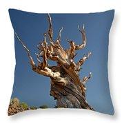 Bristlecone Pine Throw Pillow