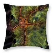 Brittle Star On Sponge, Belize Throw Pillow