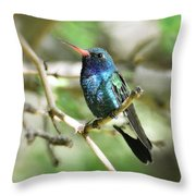 Broad-billed Hummingbird  Throw Pillow