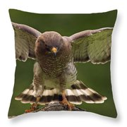 Broad Winged Hawk Throw Pillow