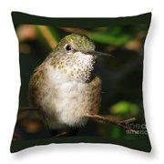 Broadbill Hummingbird Throw Pillow