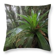 Bromeliad And Tree Ferns Colombia Throw Pillow