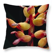 Bromeliad Detail Brazil Throw Pillow