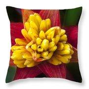 Bromiliad Blossom Throw Pillow