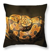 Brown And Black Snake Throw Pillow