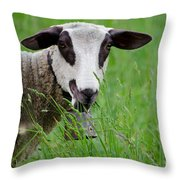 Brown And White Sheep Throw Pillow