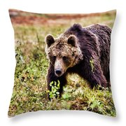 Brown Bear 210 Throw Pillow