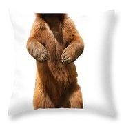 Brown Bear Ursus Arctos Throw Pillow