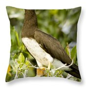 Brown Booby Sula Leucogaster Throw Pillow