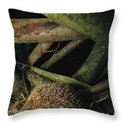 Brown-breasted Hedgehog Erinaceus Throw Pillow