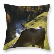Brown Cow Alps Throw Pillow