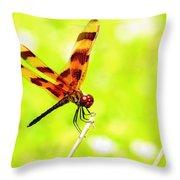 Brown Dragon Throw Pillow