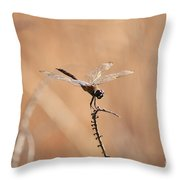 Brown Dragonfly And Brown Reeds Throw Pillow