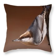 Brown-headed Nuthatch - Little Nutty Throw Pillow