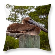 Brown Pelican At Rest Throw Pillow