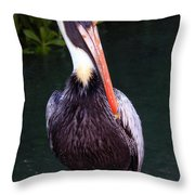 Brown Pelican Islamorada Throw Pillow
