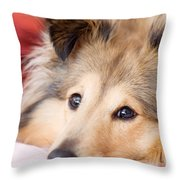 Brown Sheltie Throw Pillow