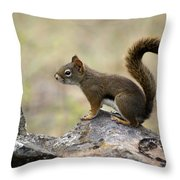 Brown Squirrel In Spokane Throw Pillow