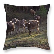 Brown Swiss Cows Coming Home Throw Pillow