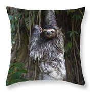 Brown Throated Three Toed Sloth Mother Throw Pillow