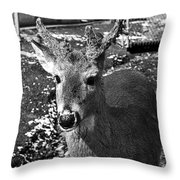 Brushy Mountain 3 Throw Pillow