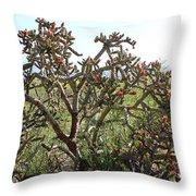 Buchorn Cholla Throw Pillow