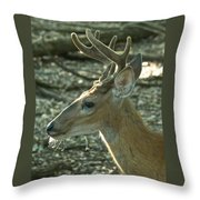 Buck 9246 4037 2 Throw Pillow
