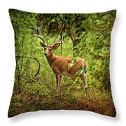 Buck In Full Velvet Throw Pillow
