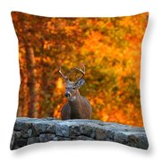 Buck In The Fall 01 Throw Pillow