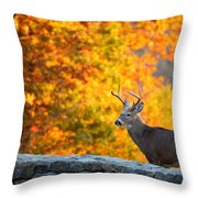Buck In The Fall 06 Throw Pillow