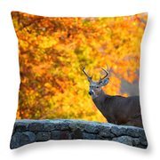 Buck In The Fall 07 Throw Pillow