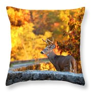 Buck In The Fall 09 Throw Pillow