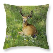 Buck What Are You Looking At Throw Pillow