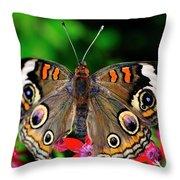 Buckeye Buttterfly Throw Pillow