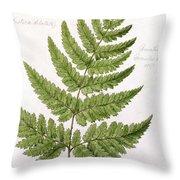Buckler Fern Throw Pillow